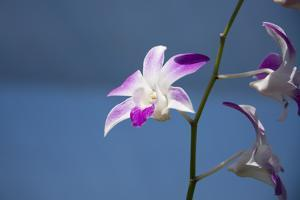 Australia, Northern Territory, Darwin. Jennys Orchid Garden by Cindy Miller Hopkins