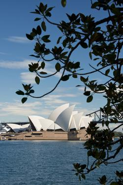 Australia, Sydney. View of the Sydney Opera House and Harbor Bridge by Cindy Miller Hopkins