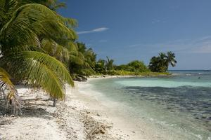 Belize, Caribbean Sea, Stann Creek District. Laughing Bird Caye by Cindy Miller Hopkins