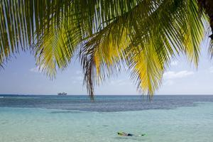 Belize, Stann Creek District, Swcmr. Snorkeling in the Caribbean Sea by Cindy Miller Hopkins