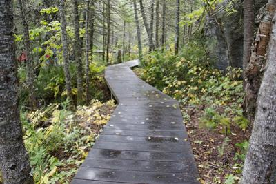 Canada, Quebec, Mingan Archipelago, Lle Quarry. Park Boardwalk by Cindy Miller Hopkins