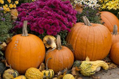 New York, Cooperstown, Farmers Museum. Decorative pumpkin display.