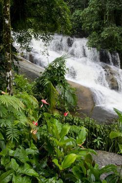 Rainforest Waterfall, Serra Da Bocaina NP, Parati, Brazil by Cindy Miller Hopkins