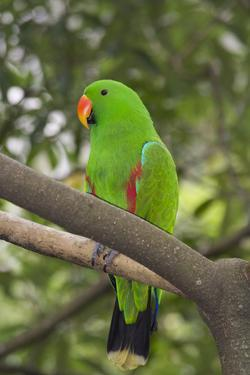 Singapore. Colorful Green Parrot by Cindy Miller Hopkins