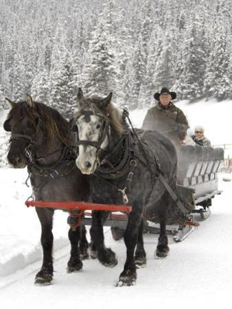 Winter Sleigh Ride, Lake Louise, Alberta, Canada by Cindy Miller Hopkins