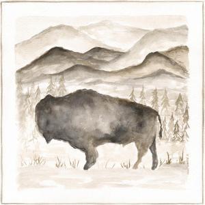 Bison by Cindy Shamp