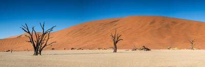 Panorama of the Dead Vlei by Circumnavigation