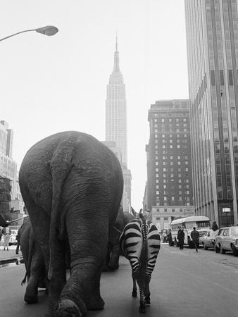 https://imgc.allpostersimages.com/img/posters/circus-animals-on-33rd-street_u-L-PZLJZW0.jpg?artPerspective=n