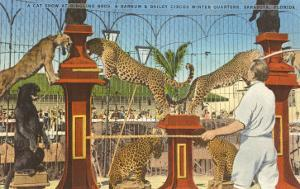 Circus Leopards, Panther, Lion, Sarasota, Florida