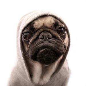 Thug Pug by CJ Foeckler
