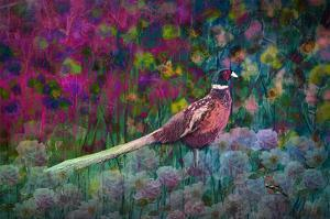 Coloured walk with Pheasant by Claire Westwood