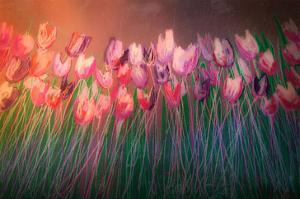 Tulips to attention by Claire Westwood