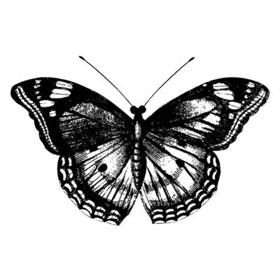Butterfly I by Clara Wells