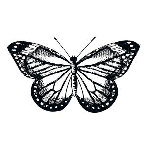 Butterfly II by Clara Wells