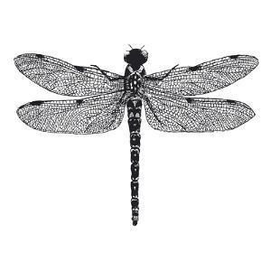 Dragonfly II by Clara Wells