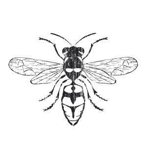 Honey Bee by Clara Wells
