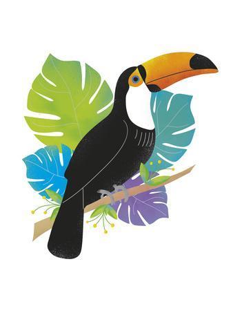 Toucan Tropics - Wild