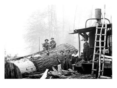 Lumber Break