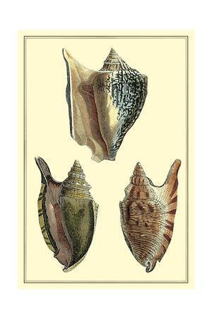 https://imgc.allpostersimages.com/img/posters/classic-shells-ii_u-L-PXN25B0.jpg?artPerspective=n