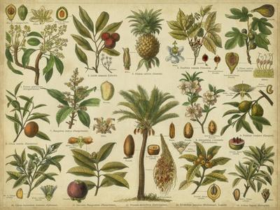 https://imgc.allpostersimages.com/img/posters/classification-of-tropical-plants_u-L-POIC010.jpg?p=0
