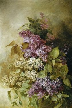 A Study of Lilac by Claude Massmann
