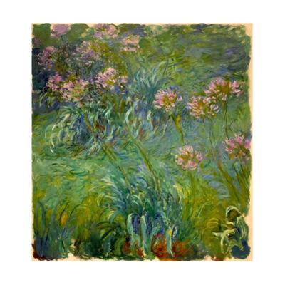 Agapanthus (1914-26) by Claude Monet