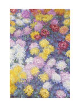 Chrysanthemums, 1897 by Claude Monet