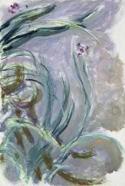 Iris, 1924-25 by Claude Monet