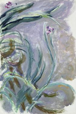 Iris, 1924-25 by Claude Monet