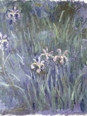 Iris, C.1914-1917 by Claude Monet