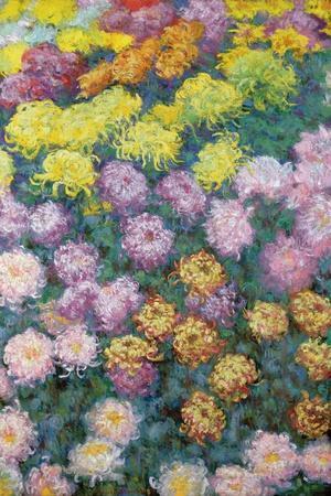 Massif De Chrysanthemes, 1897