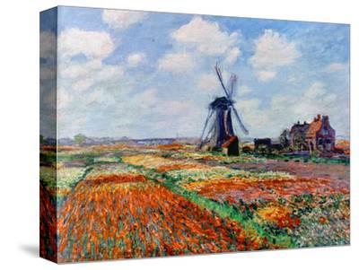 Monet: Tulip Fields, 1886 by Claude Monet