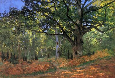 Claude Monet The Bodmer Oak Fontainbleau Forest Art Print Poster