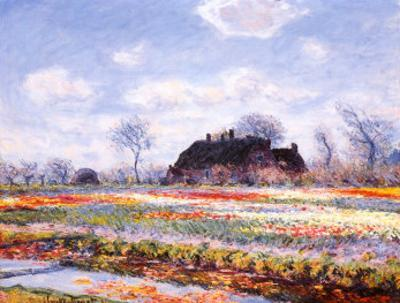 Tulip Fields at Sasenheim by Claude Monet