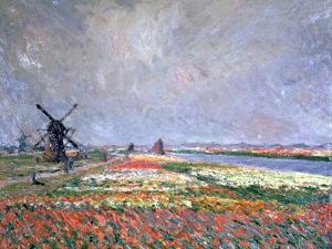 Tulip Fields Near Leiden, 1886 by Claude Monet