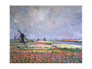 Tulip Fields Near Leiden, 1886 by Claude Monet