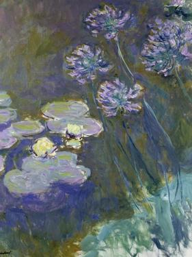Waterlilies and Agapanthus, 1914-17 by Claude Monet