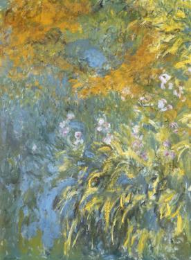 Yellow Iris by Claude Monet
