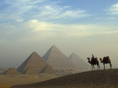 Camels and Driver at the Pyramids Complex, Egypt
