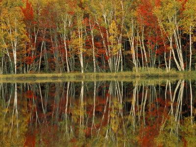 Fall Foliage and Birch Reflections, Hiawatha National Forest, Michigan, USA