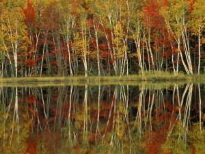 Fall Foliage and Birch Reflections, Hiawatha National Forest, Michigan, USA by Claudia Adams