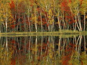 Fall Foliage and Birch Reflections, Hiawatha National Forest, Michigan, USA by Claudia Adams