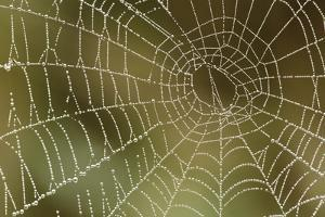 Florida, Dew Spider Web, Dina Darlina by Claudia Adams