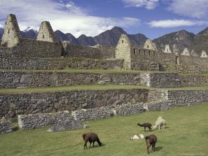 Llama and Ruins, Machu Picchu, Peru by Claudia Adams
