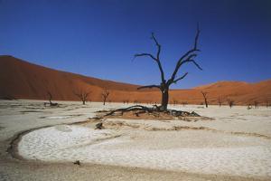 Namibia, Sossusvlei, Deadvlei, Dead Tree with Water Mark by Claudia Adams