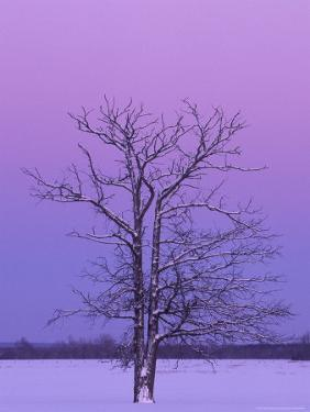 Two Trunked Tree at Sunrise, Chippewa County, Michigan, USA by Claudia Adams