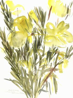Evening primroses; 2004 by Claudia Hutchins-Puechavy