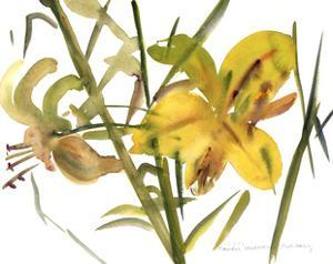 Lilies, 1987 by Claudia Hutchins-Puechavy