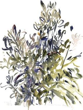 Senecio and other plants, 2003 by Claudia Hutchins-Puechavy