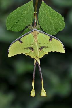 Devil's hand Tree flower, Sierra Madre del Sur, Mexico by Claudio Contreras